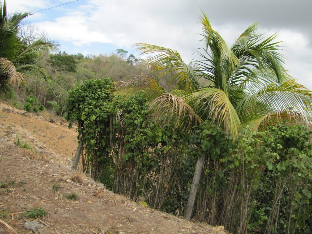 deforestation in Trinidad
