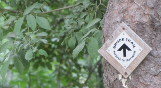 Herbs on the Bruce Trail – Ontario