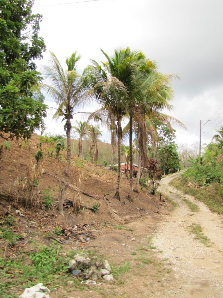 Deforestation on the island in Trinidad