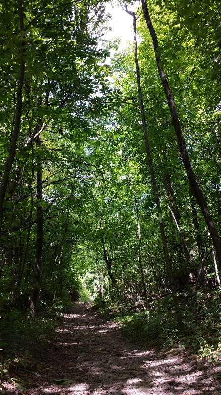 Forest Path in Ontario