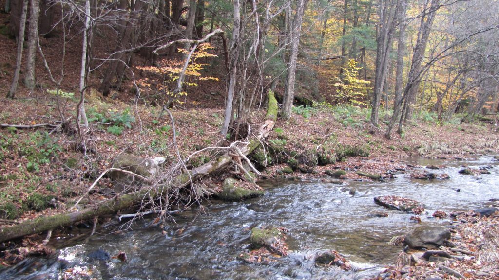 Stream in a forest in Pennsylvania