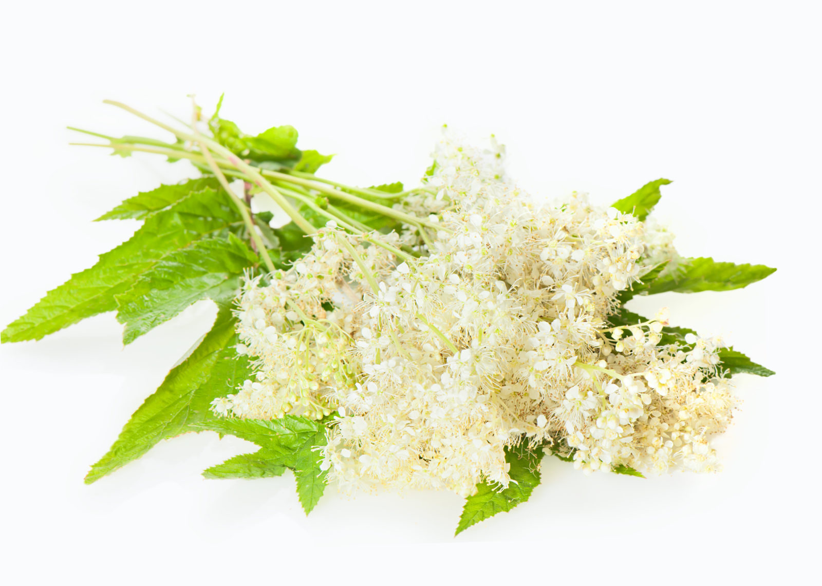 Heartburn and Meadowsweet