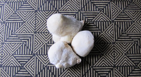 Lion's Mane – Brain Superfood