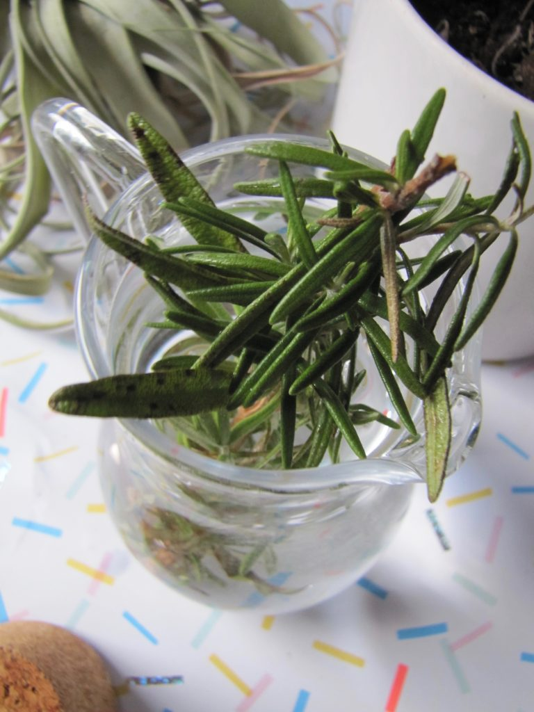Rosemary close up in water