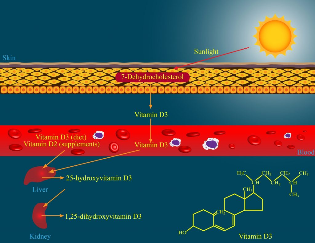 Vitamin D synthesis on skin