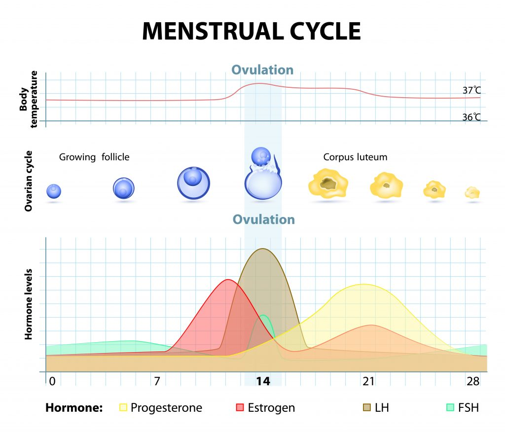 How to quickly cause monthly and restore the menstrual cycle