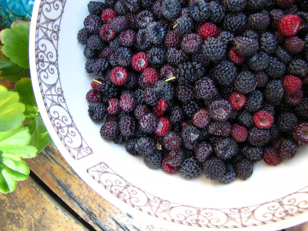 black raspberries in a bowl