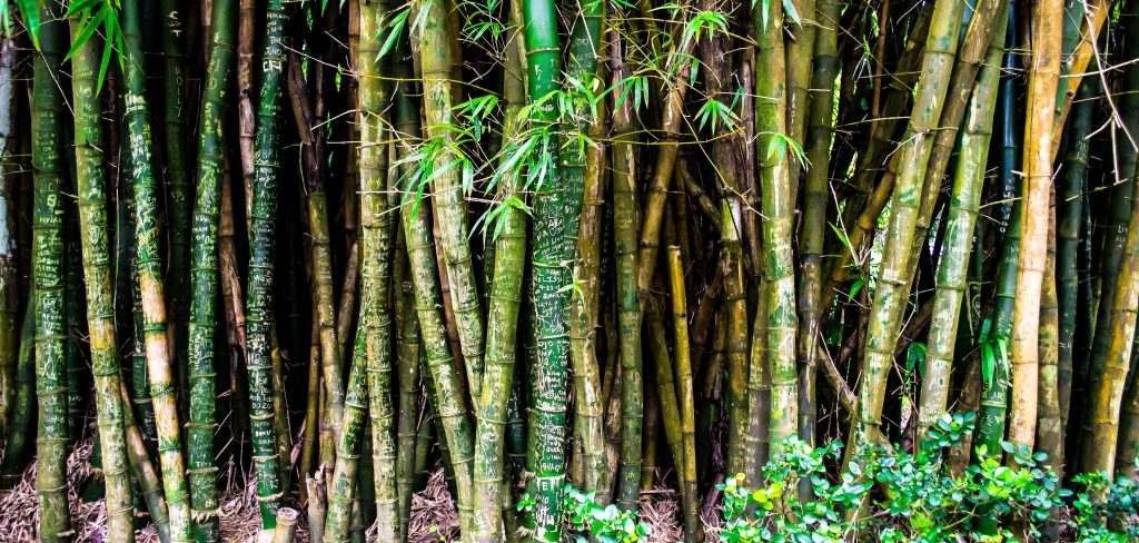 bamboo forest wall