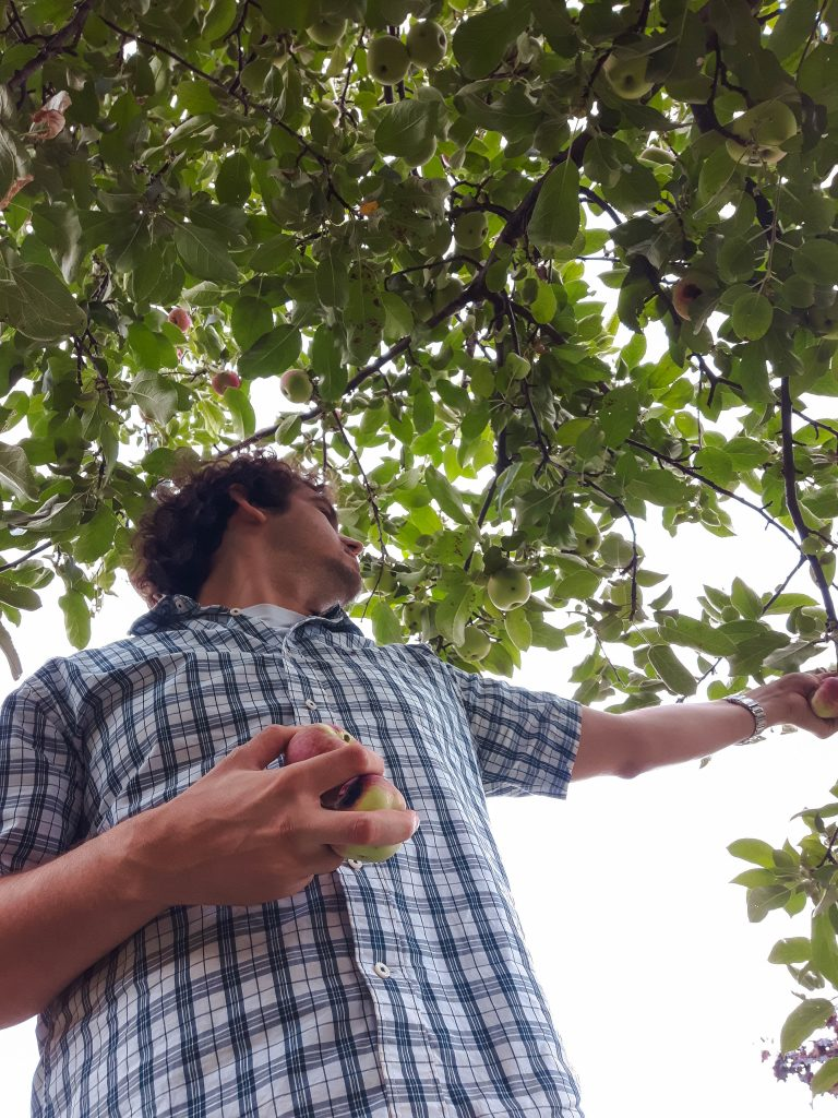 Patrick Picking Apples