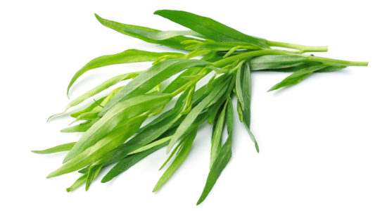 Tarragon – The King of Herbs