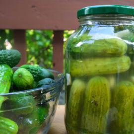 Pickling Cucumbers and Fermented Pickles